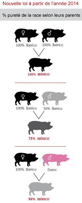 Qualités et croisements entre cochons ibériques