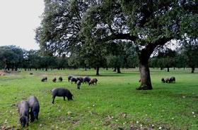 La Dehesa maison du porc iberique
